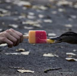 Content Marketing, Instagram Bild Flutschfinger für Mobiler Eisverkauf 24 von Franca Siegel, Grafikdesignerin